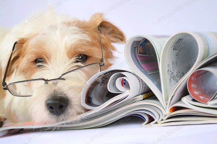 Wise dog with magazines