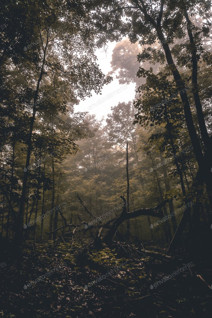 Meet me in the woods