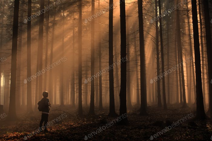 Man in the forest with rays of the sun,