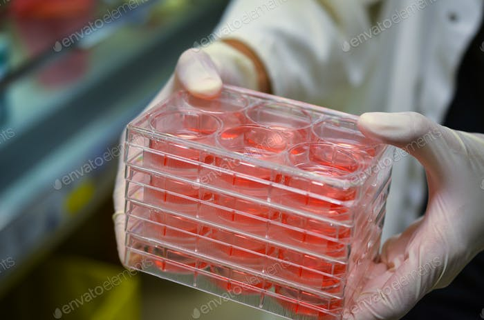 Cell culture plates in research laboratory