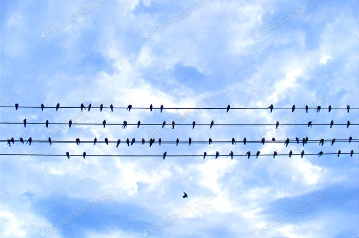 Birds of wires