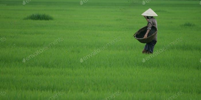 Vietnam-Reis-Bauer