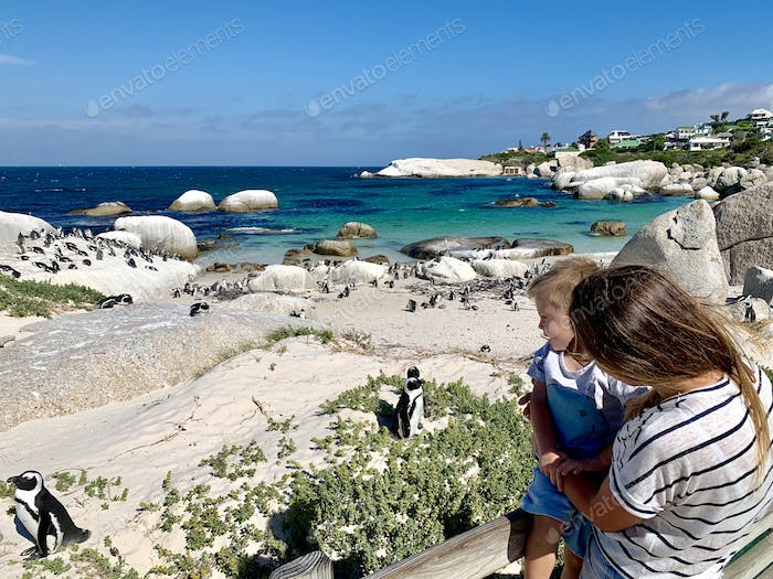 🌟Nominated🌟Mom and son exploring South Africa, penguin colony near Cape Town  💲