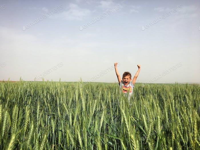 Wheat champion