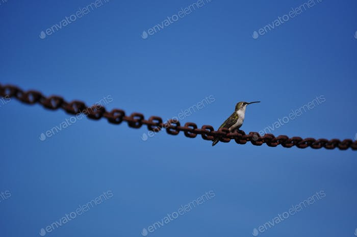 Resting wings