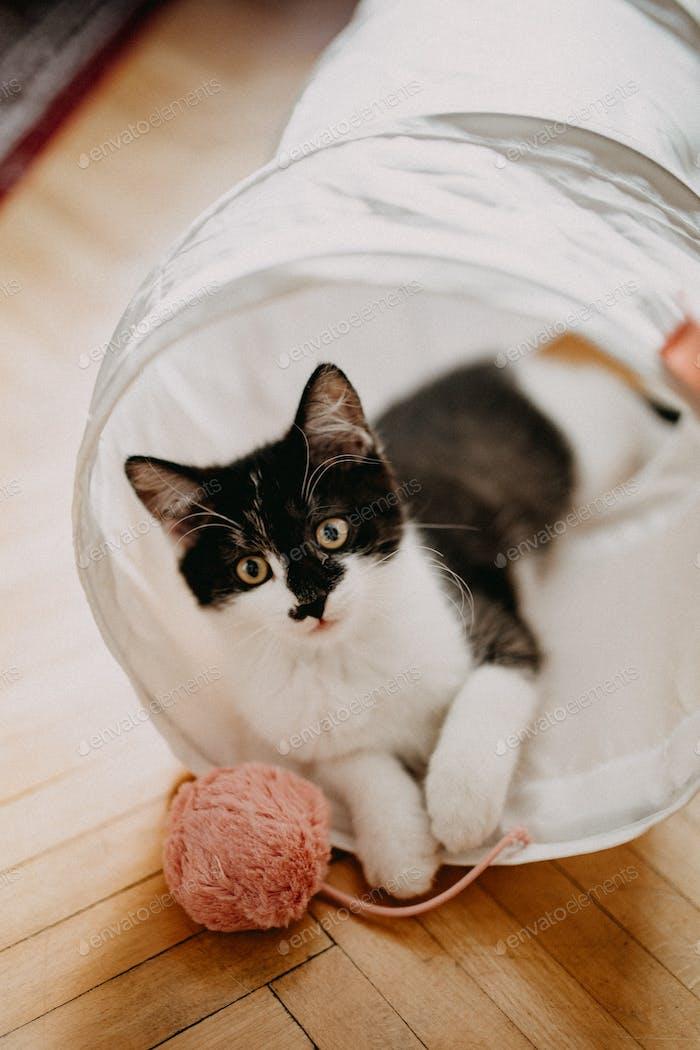 Cute kitten looking away
