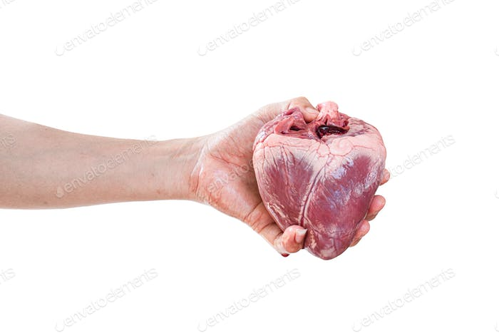 Human heart in hand isolated on white background. with clipping path
