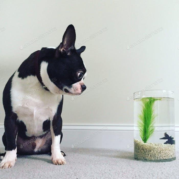 Benson und Marvin. Bug-eyed Kumpel.