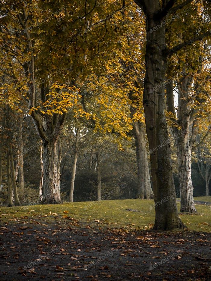 Hermosos árboles con hojas amarillas durante la temporada de otoño