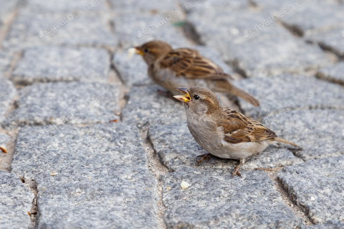a sparrow with a crumb of bread in its beak
