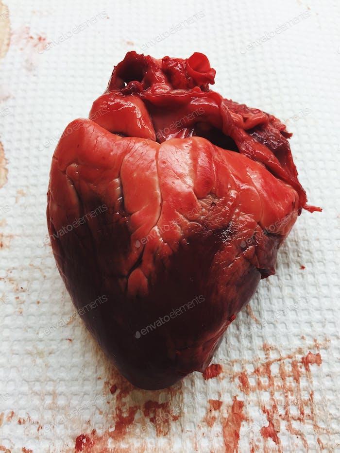Mein Arzt hat mein Herz gestohlen 😱