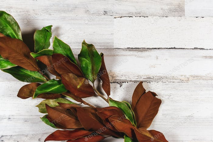 Rustic autumn background with dried magnolia leaves on white distressed wood