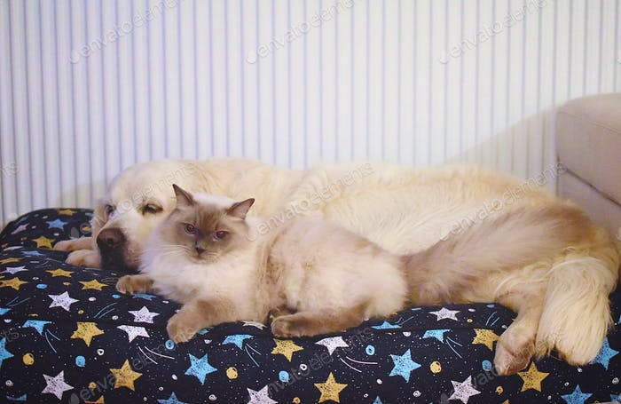 A cat and a dog on a huge pets pillow, snug and cuddly. ❤️NOMINATED❤️