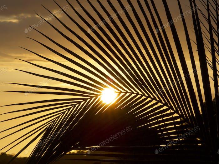 Sun fan