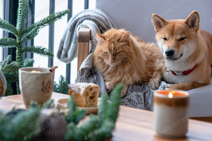 Domestic cat and dog lying in cozy armchair and looking through window. World pet day