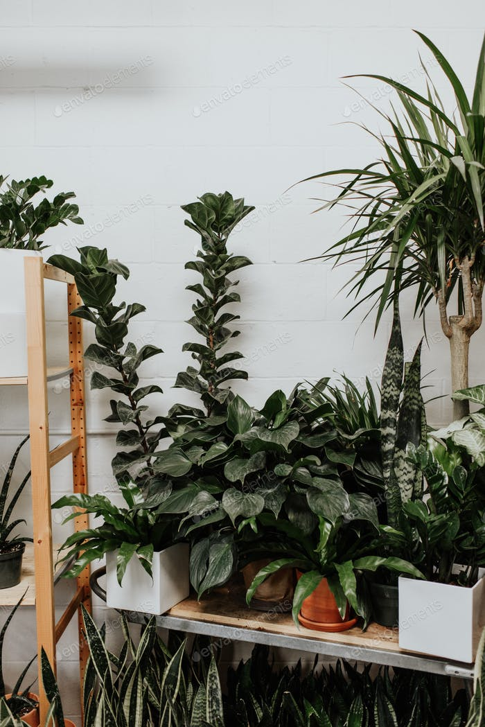 Modern houseplants stylish greenery in a small boutique millennial life