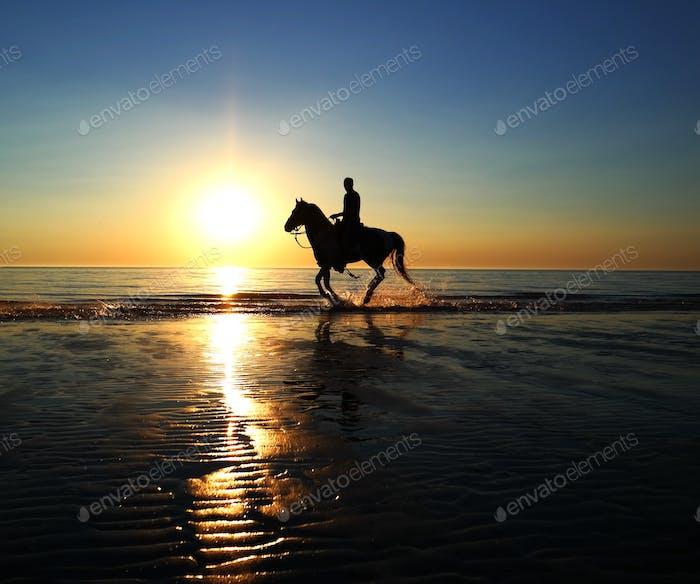Horsebackriding on the beach