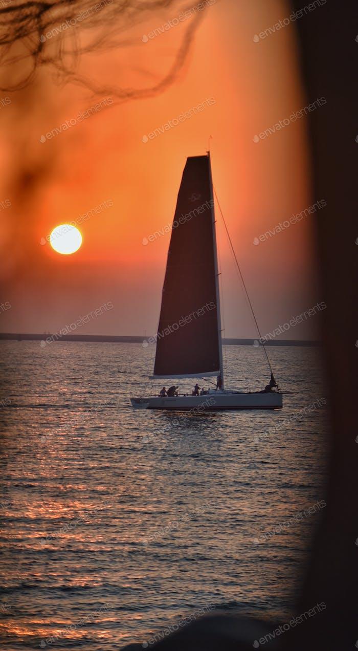 Sunset Sailboat through the shoreline trees