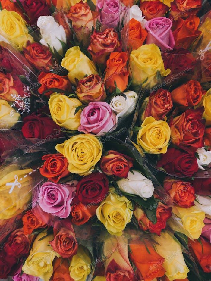 Rose Heaven...
