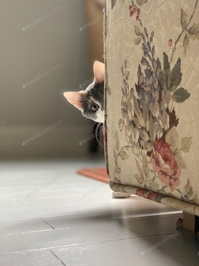 Calico kitten peeking around the corner of a sofa. #debb_a/pets