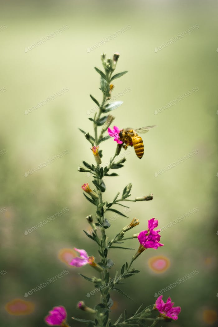 Bee collecting honey in flower essence