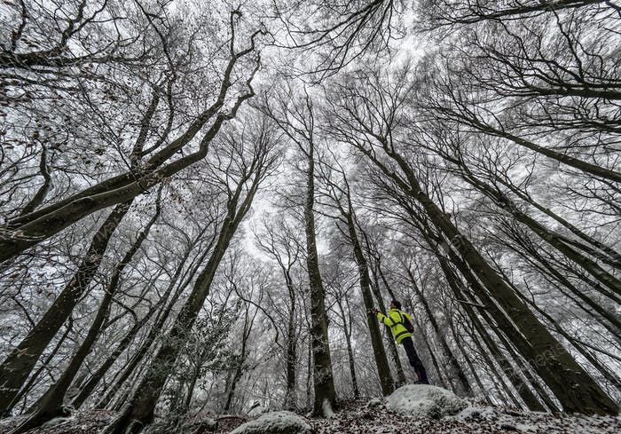 In a  wintry wood, somewhere in Luxembourg.....