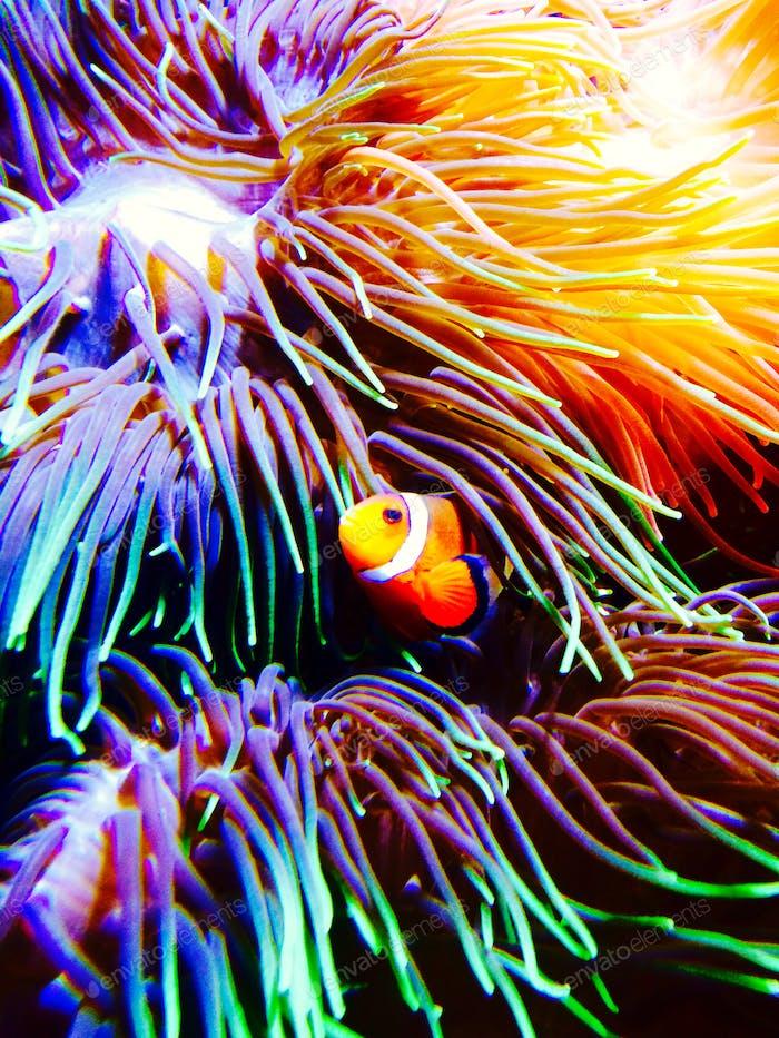 Oceans treasure