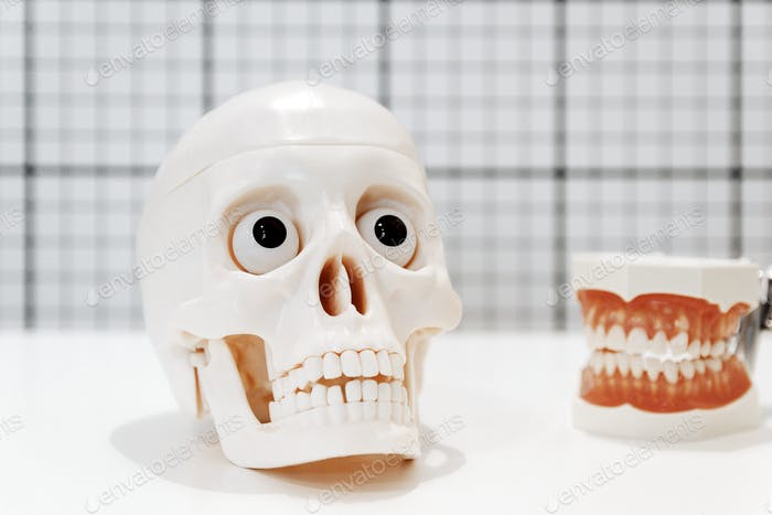 Selective focus of dental models on white background, human jaw, teeth, skull.