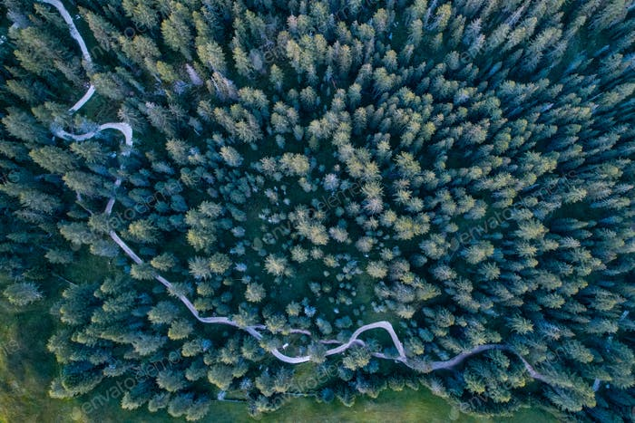 Aerial view of a green pine forest