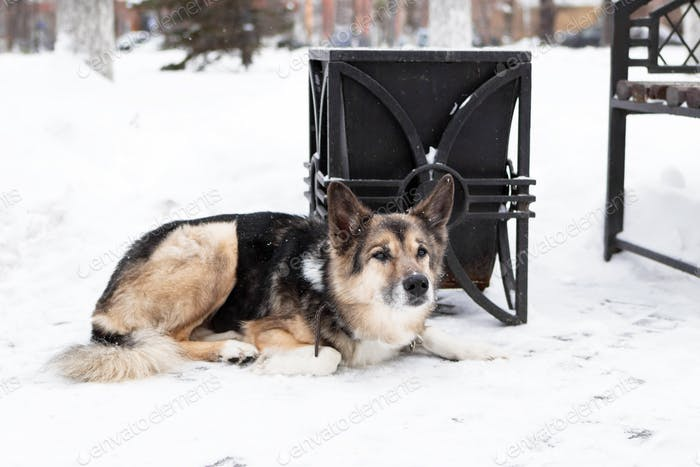 Homeless mongrel dog near to an urn and a bench in a winter snowy park.