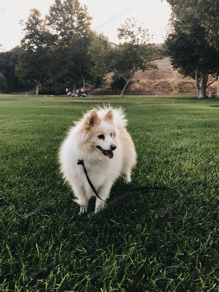 Dog standing in the park after a long walk in the afternoon
