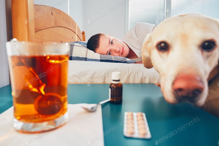 Loyal dog and his sick owner in bed. Hot tea and medicine on the table.