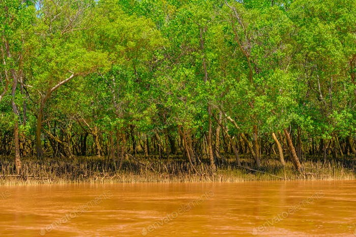 Yellow African river and mangrove forest