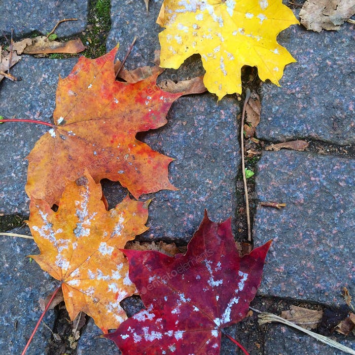 The many colours of autumn