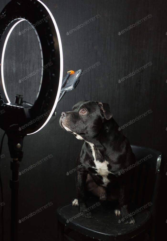 Dog blogger