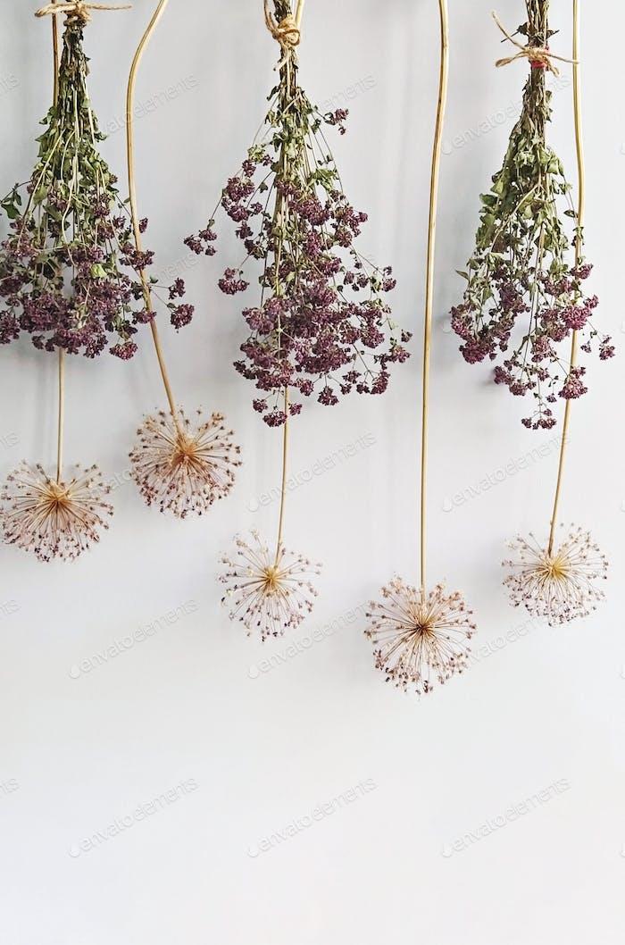 Dry inflorescence allium flowers and oregano bundles on white background. Minimal floral
