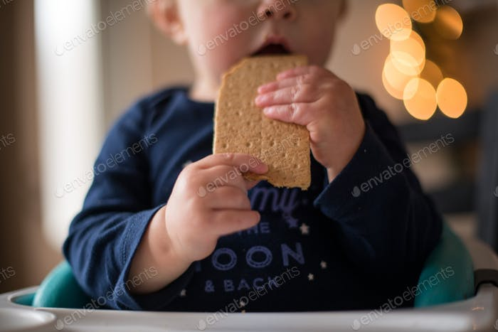 Close-up of chubby baby hands holding a graham cracker
