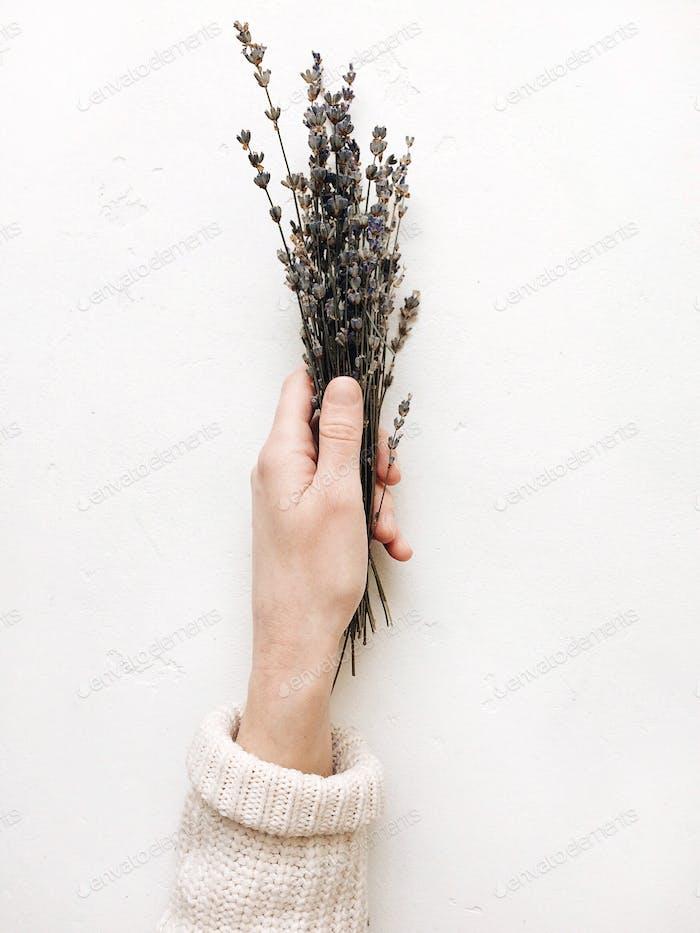 lavender in hands