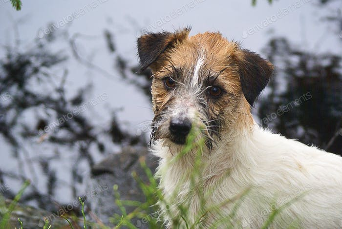 Wet and cute doggy face