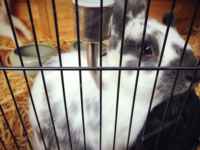 A rabbit in the cage