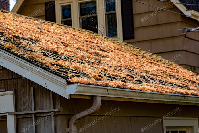 Fallen Autumn leaves on the roof of a home with rain gutters