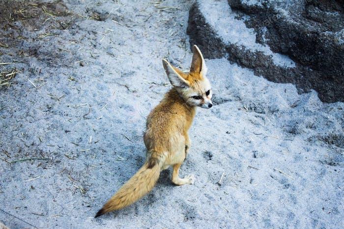 Hey foxy.