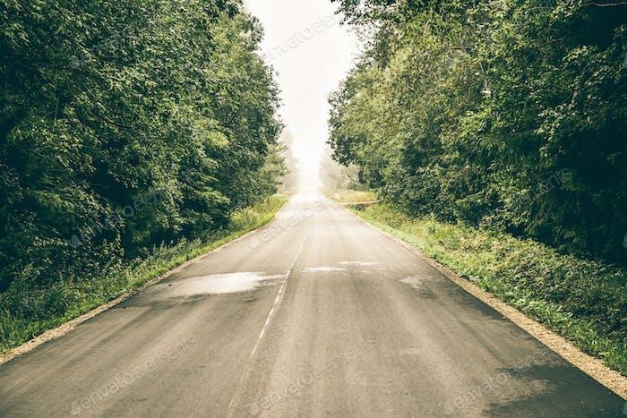 White fog over a long asphalt road that goes through the forest. Beautiful desktop wallpaper