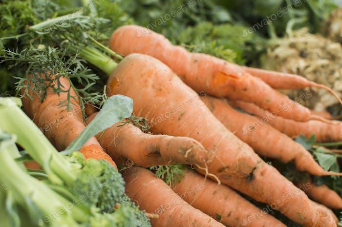 Frisch gezogenes hausgemachtes Gemüse