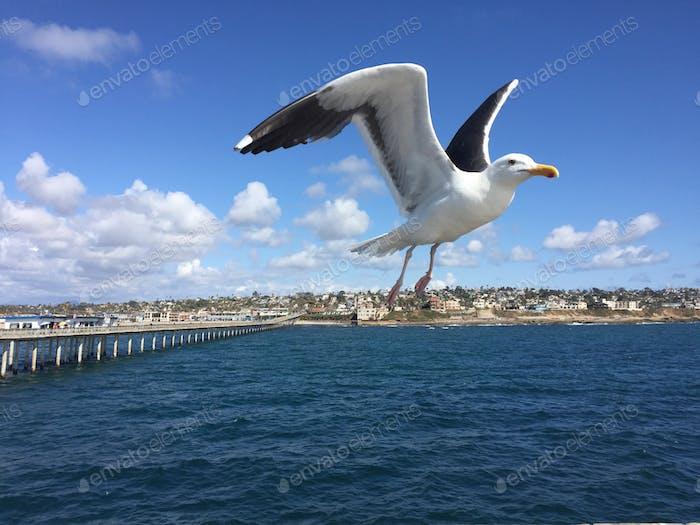 Seagull mid flight
