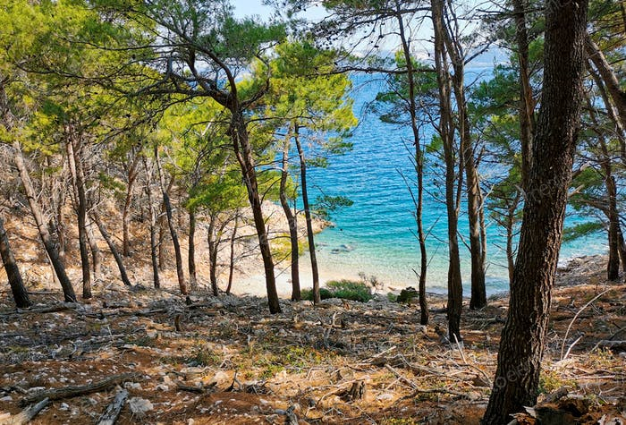 Beautiful sea cove with beach. Forest, trees , path, no people, beauty in nature.