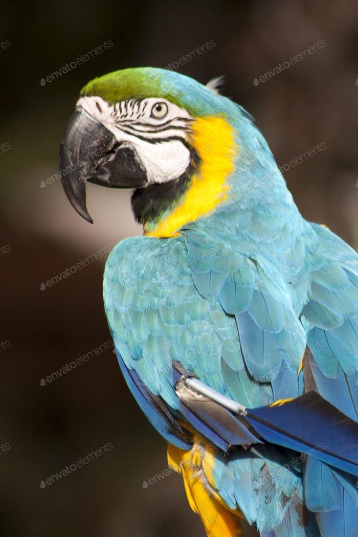 Nominiert  Schöner blauer Vogel