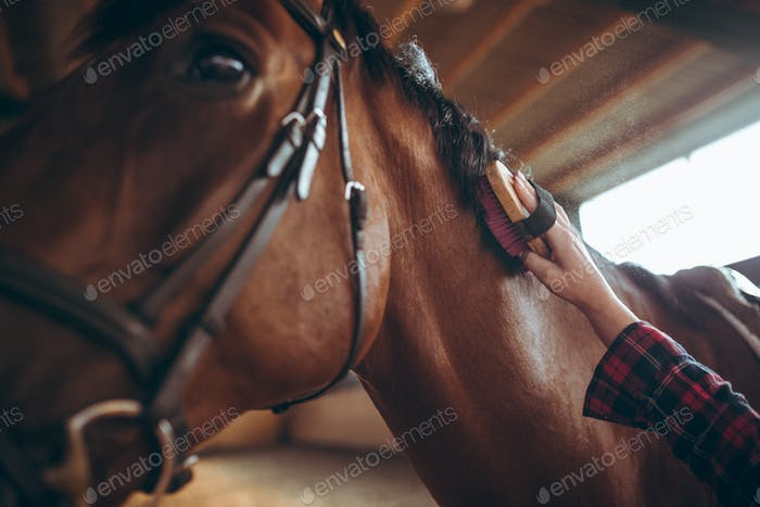 Close up of hands brushing horse