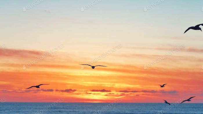 Seagulls flying in the sunset over the ocean