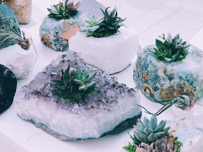 Succulent plants and amethyst crystals